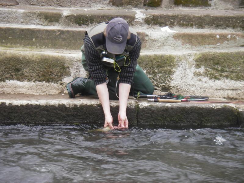 L'un des momments les plus sympa de la pêche à la mouche: la remise à l'eau de l'adversaire.