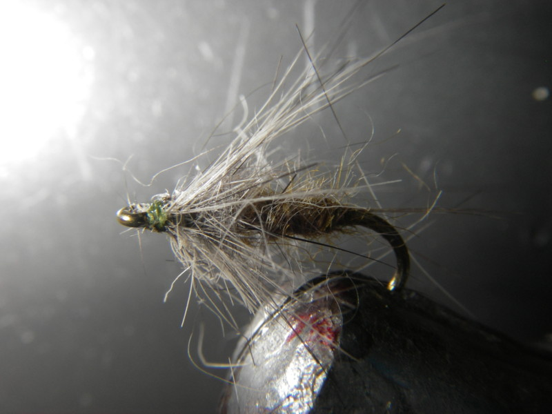 émergencte chinchilla H18