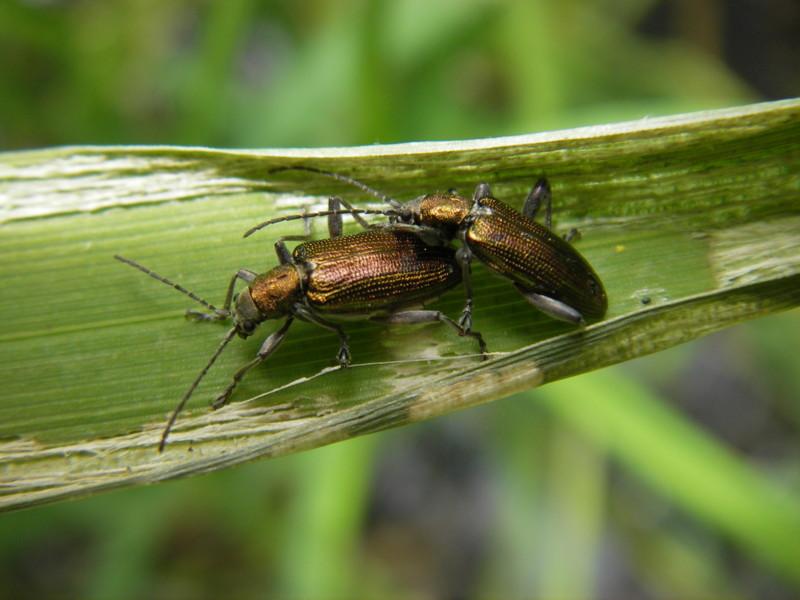 Petits coléoptères
